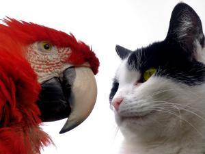 The Parrot and the Cat by Abdul Kadir Audah