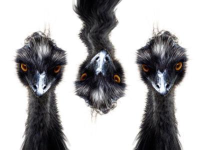 Three Emus