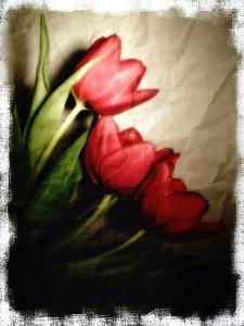 Three Red Tulips by Abdul Kadir Audah