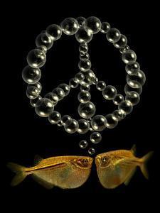 Two Tetra Fish Blowing Peace Symbol Shaped Bubbles by Abdul Kadir Audah
