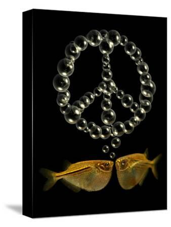 Two Tetra Fish Blowing Peace Symbol Shaped Bubbles