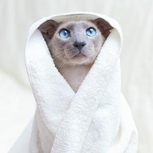 Hairless Cat In Towel by AberratioN