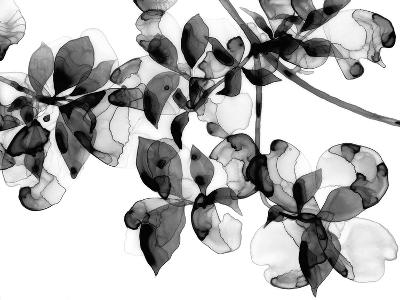 Abloom - Noir-Jackie Battenfield-Giclee Print