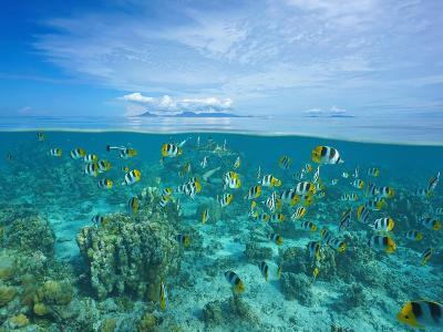 Above and Below Sea Surface with Raiatea and Tahaa Islands-Seaphotoart-Photographic Print