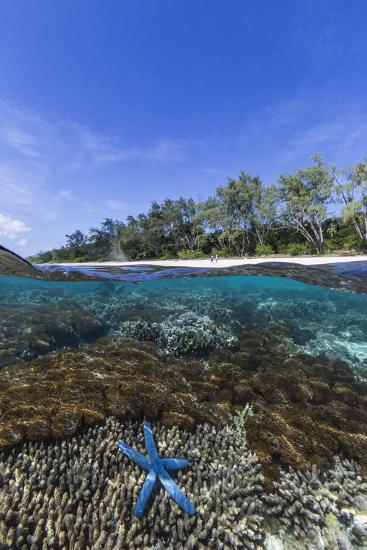 Above and Below View of Coral Reef and Sandy Beach on Jaco Island, Timor Sea, East Timor, Asia-Michael Nolan-Photographic Print