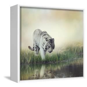 White Tiger near A Pond by abracadabra99