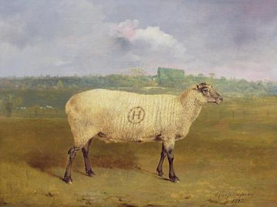 A Prize Ewe with Monogram 'H', Belonging to Mr J.A. Houblon, Hallingbury Place, Essex, 1812