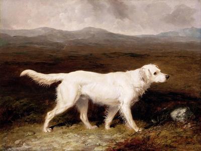 Charles Brett's White English Setter 'sam' in a Moorland Landscape, 1836