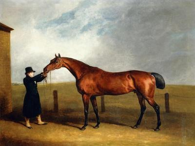 Colonel Udny's Bay Colt Truffle by Sorcerer Held by a Groom, 1815