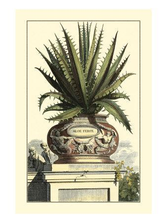 Antique Munting Aloe I