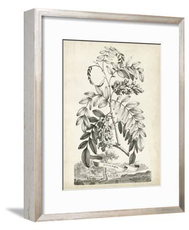 Scenic Botanical I