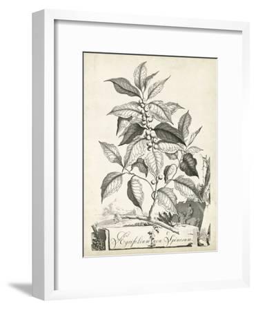 Scenic Botanical III