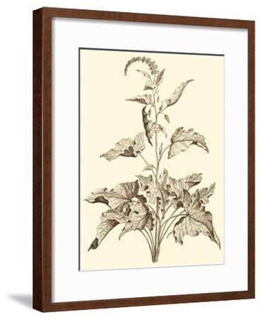 Sepia Munting Foliage II
