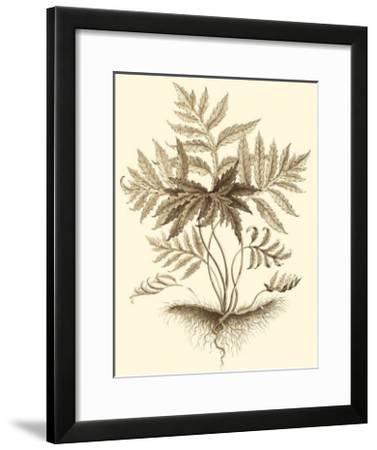 Sepia Munting Foliage IV