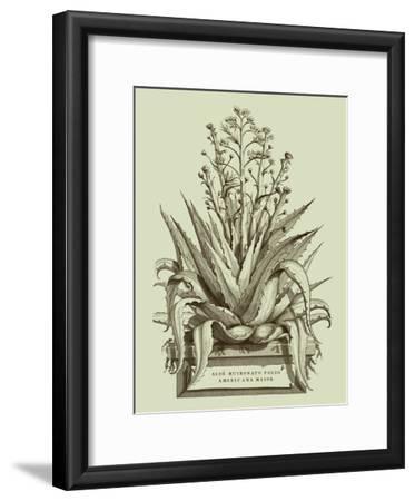 Vintage Aloe IV