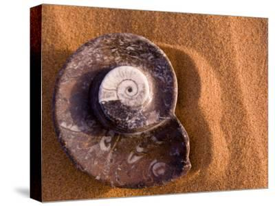 Seashell Fossil in the Sand
