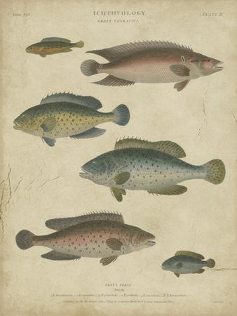 Ichthyology I
