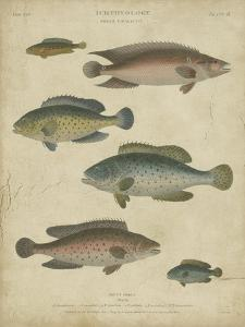 Ichthyology I by Abraham Rees