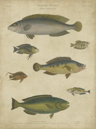Ichthyology II