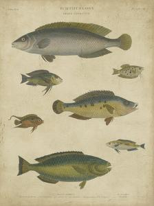 Ichthyology II by Abraham Rees