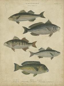 Ichthyology III by Abraham Rees
