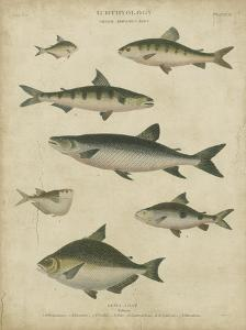 Ichthyology IV by Abraham Rees