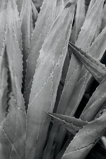 Abstract Agava II-Elizabeth Urquhart-Photo