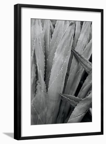 Abstract Agava II-Elizabeth Urquhart-Framed Photo