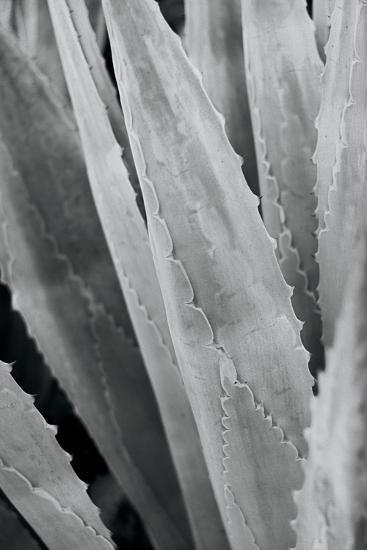 Abstract Agava IV-Elizabeth Urquhart-Photo