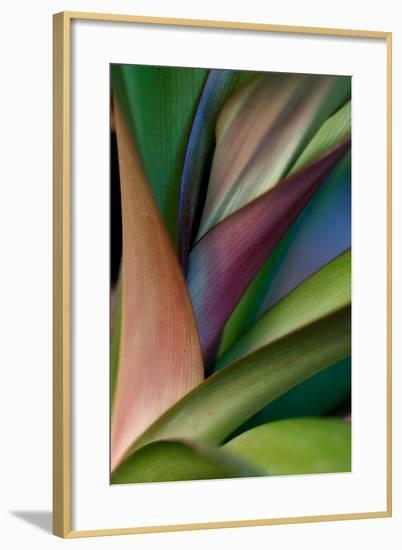 Abstract Floral of a Bird of Paradise Plant-Vickie Lewis-Framed Premium Photographic Print