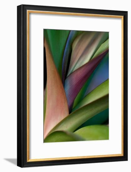 Abstract Floral of a Bird of Paradise Plant-Vickie Lewis-Framed Photographic Print