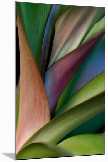 Abstract Floral of a Bird of Paradise Plant-Vickie Lewis-Mounted Photographic Print