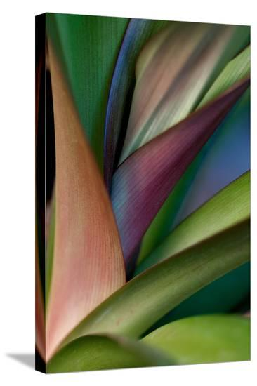 Abstract Floral of a Bird of Paradise Plant-Vickie Lewis-Stretched Canvas Print