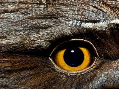 Abstract Image of the Eye and Feathers of a Tawny Frogmouth-Brooke Whatnall-Photographic Print