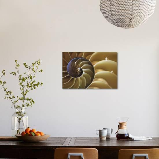Abstract Of A Nautilus Shell Georgia Usa Photographic Print Joanne Wells Art Com