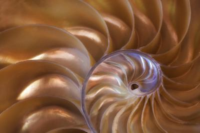 Abstract of a Nautilus Shell, Georgia, USA-Joanne Wells-Photographic Print