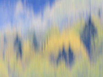 Abstract of Fall Colors of Spruce and Hemlock, Nuuksio National Park, Finland-Arthur Morris-Photographic Print