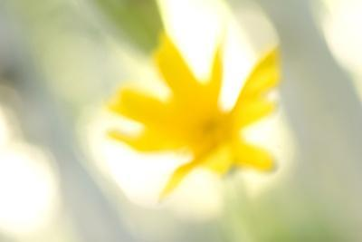 https://imgc.artprintimages.com/img/print/abstract-of-wildflower-in-early-morning-in-the-inyo-national-forest-california_u-l-q12x4310.jpg?p=0