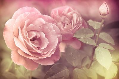 Abstract Romantic Pink Roses Flowers with Water Drops-Im Perfect Lazybones-Art Print