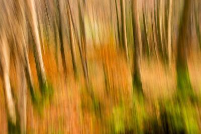 Abstract Shot of Autumnal Woodland in Grasmere, Lake District Cumbria England Uk-Tracey Whitefoot-Photographic Print