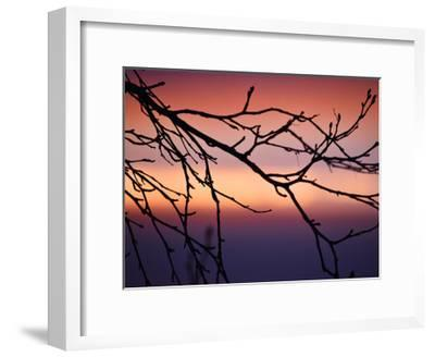 Abstract Sunset-Savanah Plank-Framed Giclee Print
