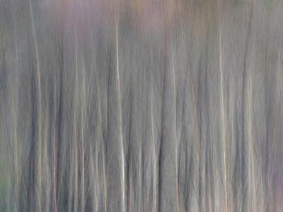 Abstract Tree Pattern, Great Smoky Mountains National Park, North Carolina, Usa-Adam Jones-Photographic Print