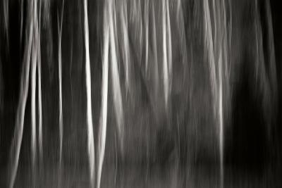 Abstract Trees-Beth Wold-Photographic Print
