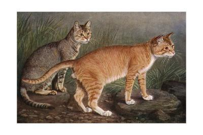 Abyssinian and Indian-W^ Luker-Giclee Print