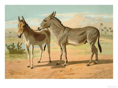 Abyssinian Male and Indian Onager Female-Samuel Sidney-Art Print
