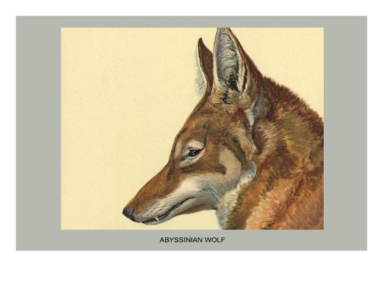 Abyssinian Wolf-Louis Agassiz Fuertes-Art Print