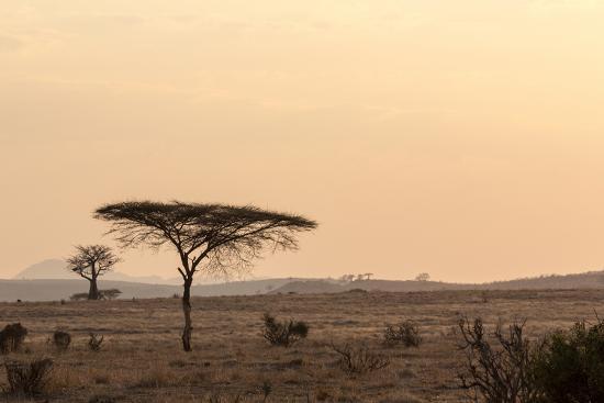 Acacia and Baobab Trees-Claudia Uribe-Photographic Print