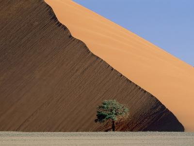 Acacia at the hillside of a dune in Namib Naukluft Park-Frank Lukasseck-Photographic Print