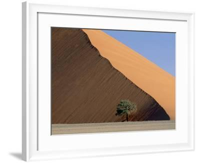 Acacia at the hillside of a dune in Namib Naukluft Park-Frank Lukasseck-Framed Photographic Print