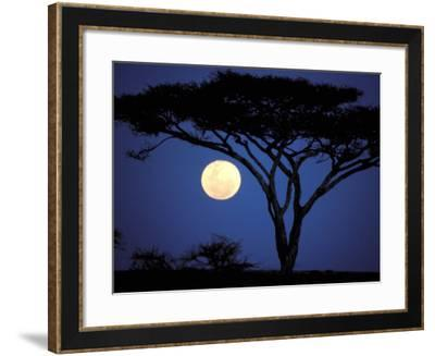 Acacia Tree in Moonlight, Tarangire, Tanzania-Marilyn Parver-Framed Photographic Print